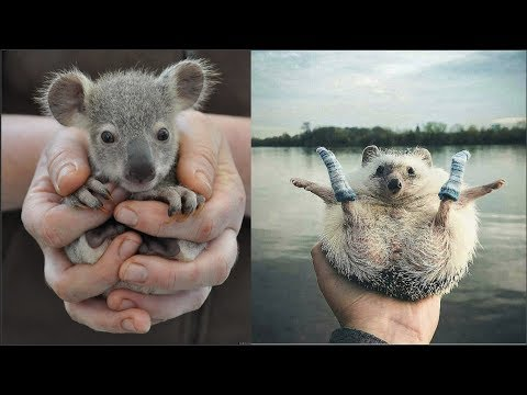 Cute baby animals Videos Compilation cute moment of the animals - Cutest Animals #4