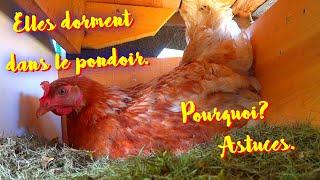 Vos poules dorment dans le pondoir ? Porte coulissante.
