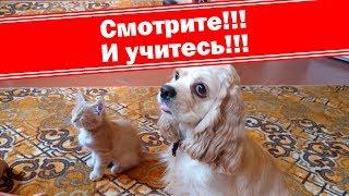 Крепкая дружба, собака, кот и мышь