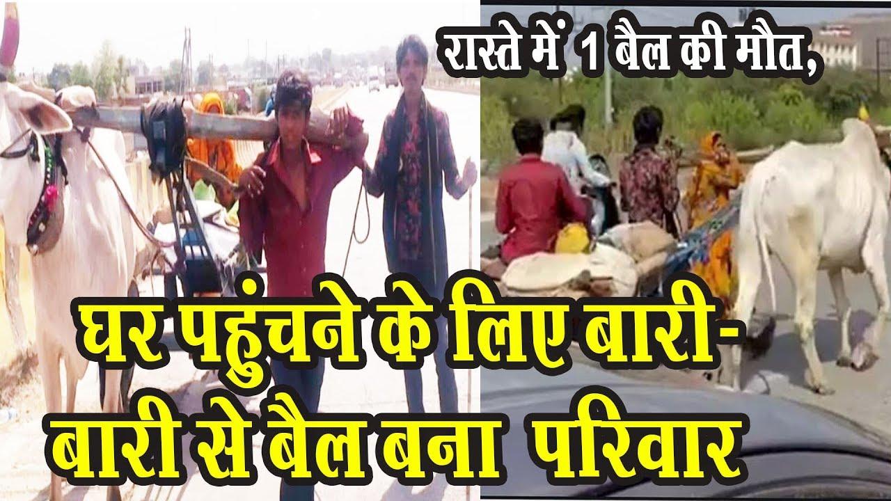 घर पहुंचने के लिए बारी-बारी से बैल बना  परिवार | मजदूर की दुर्दशा की वीडियो वायरल | Mobile News 24.