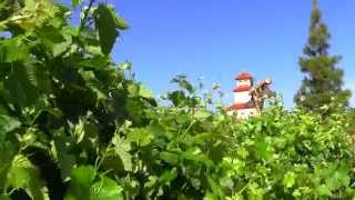 South Coast Winery Temecula California