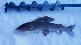 Весенняя рыбалка. Огромный хариус. Подводные съёмки.