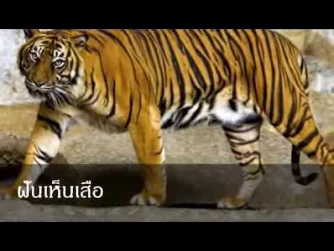 ฝันเห็นเสือ หมายถึงอะไร (เลขเด็ด)