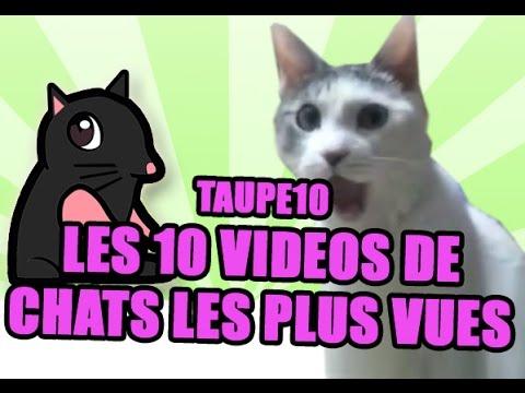 TOP 10 des vidéos de Chats les plus vues de tous les temps !
