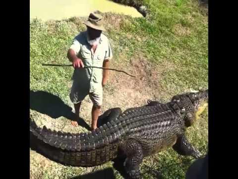 Укротитель крокодилов