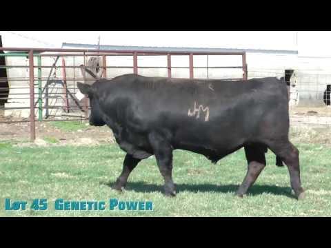 Lot 45  Genetic Power