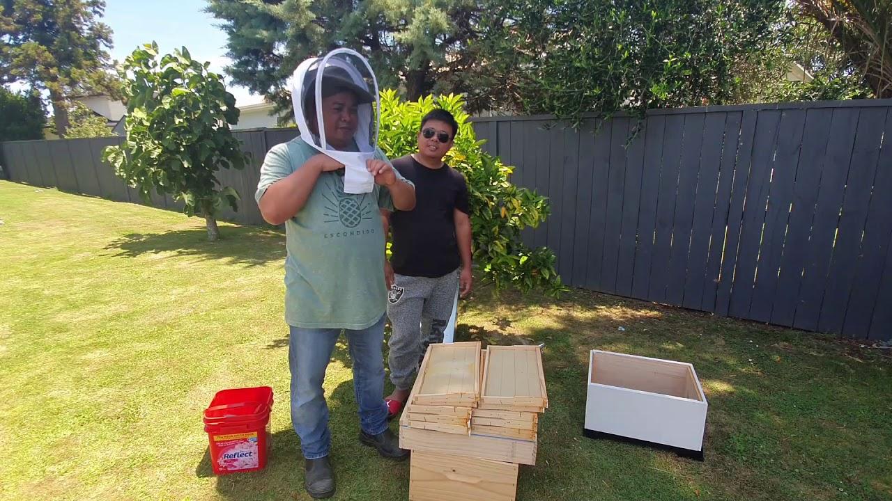 Beekeeping for Beginners In Backyard - YouTube