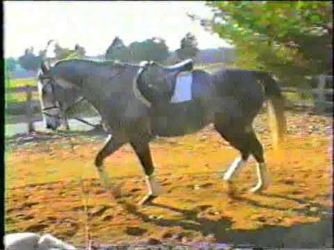Damages of long low.Equine Biomechanics
