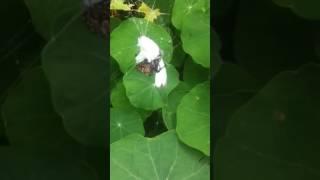 control natural de insectos