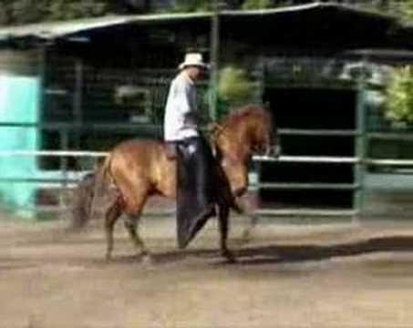 esteroides para caballos de coleo