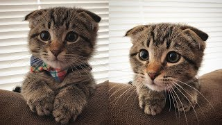 This Little Kitten Is Too Cute To Make You Say Aww   cute little kitten is too adoreable