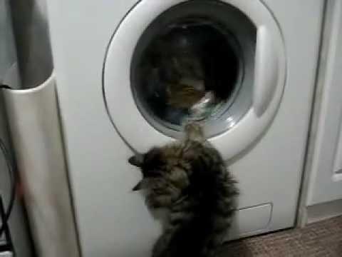 Играть в кот в стиральной машине