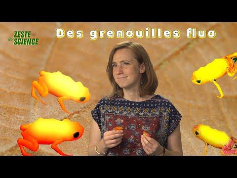Des grenouilles fluorescentes l ZdS#28