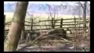 Karelski Pies na Niedźwiedzie - złajowisko 2009 cz.II