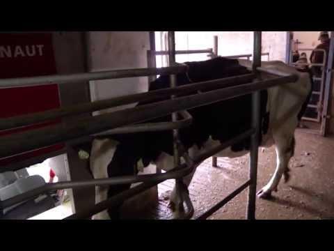 Gee-Aye Holsteins, Ethan, SD