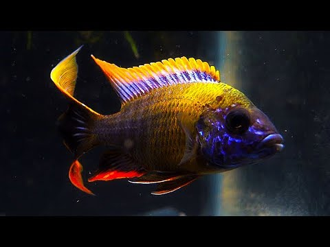 Aquarium Maintenance W/ Something Fishy Inc. Part 2
