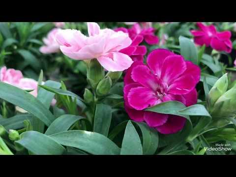 Цветы в ОБИ. Отдел уценок.
