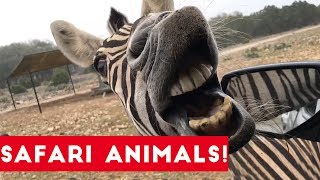 The Cutest Safari Animals Home Video Bloopers of 2017 Weekly Compilation | Funny Pet Videos