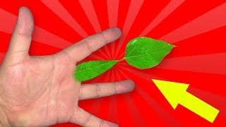 How to do 7 NATURE Magic Tricks!