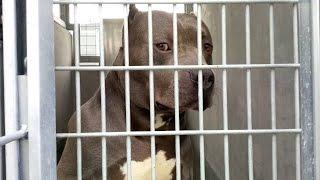 Приют для собак в Лос-Анджелесе | США| Видеоблог