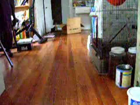 Smart cat trained to play fetch!