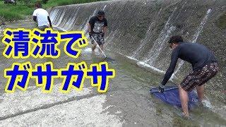夏の清流で魚捕りしたら色々捕れて楽し過ぎた!