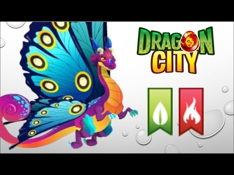 Dragon City - Getting Butterfly Dragon 100% (No Hack)