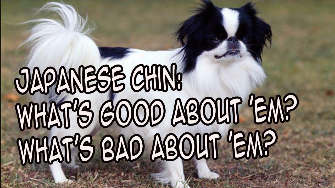 Japanese Tv Show Dog Bark