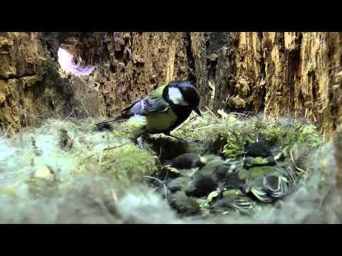 La vie des oiseaux 2015 20mn   1280x720