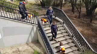 Social Training Pack Walks- Bridge to estuary and back