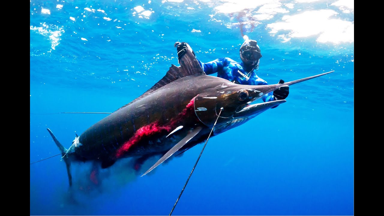 Spearfishing a Huge Black Marlin with Tim McDonald - Full ...