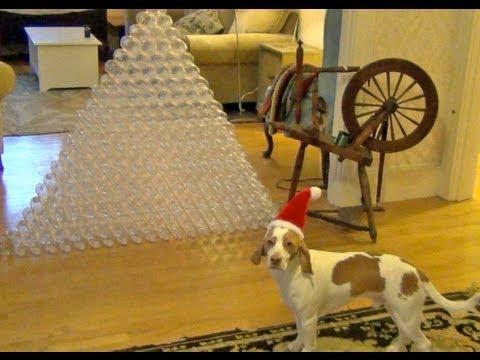 0 Cão ganha 210 garrafas de Natal