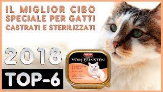 Il Miglior 🔥 Cibo Speciale Per Gatti Castrati E Sterilizzati 😸 TOP-6 🔥