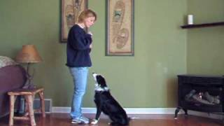 Dog Academy Presents Teaching Your Dog To Focus.