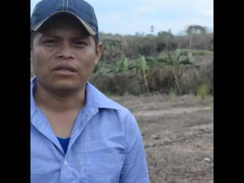 Indígenas de Panamá usarán drones para cuidar los bosques