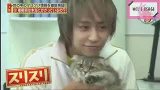 Yaotome Hikaru vs Cats || 八乙女光 vs 猫 Credits to the respectful ...