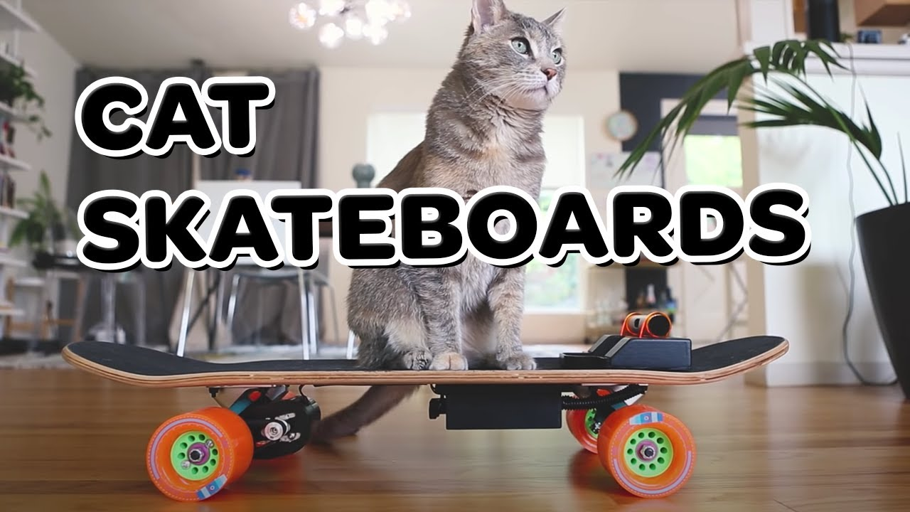 DIY electric skateboard for my cat!
