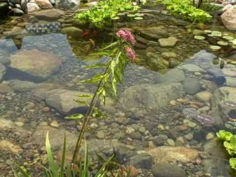 Water garden koi pond installation manalapan nj youtube for Fish pond installation