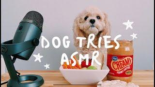 Dog Tries ASMR