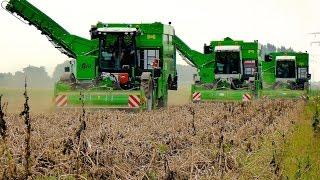 Potato Harvest | 3x AVR PUMA+ - 4 row potato harvesters | Aardappels rooien - Loonbedrijf Breure