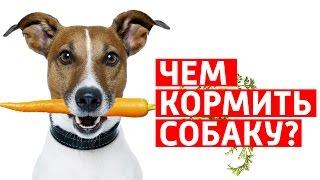видео витамины для собак