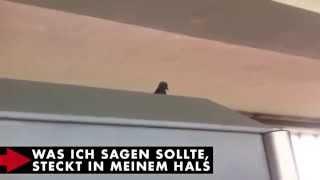 DONOTS - Karacho Snippet - 04/14 - Problem Kein Problem
