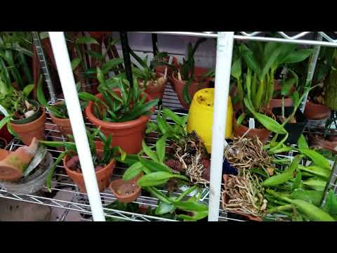 West Orchid And Garden Tour