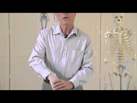 Fascia In Movement: The Essentials Preview