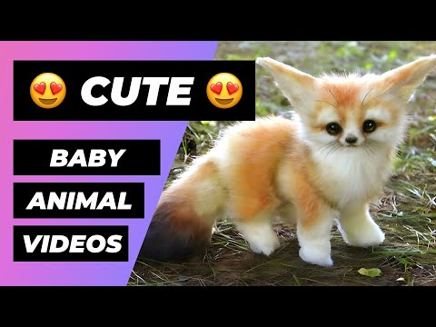 Baby Animals 🔴 Funny and Cute Baby Animal Video Compilation (2018) Animales Bebés Vídeos