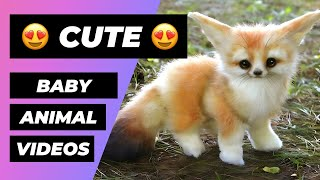 Download Baby Animals 🔴 Funny and Cute Baby Animal Video Compilation (2018) Animales Bebés Vídeos Mp3 and Videos