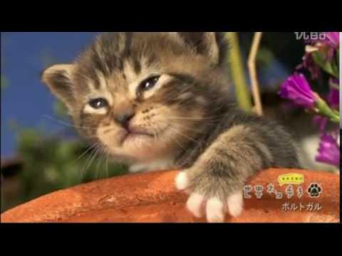 【悶絶注意】可愛すぎる子猫がにゃー! in Portugal:Cute cat meows in Portugal