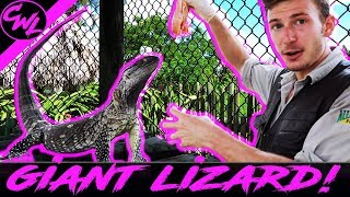 GIANT LIZARD, BABY BOBCAT, AND MORE!