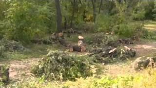 Вырубка деревьев на Зелёном Острове в Омске(Вырубаются деревья в парке