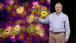 Elliot Meyerowitz (Caltech, HHMI) 3: Plant development: Physical force as a signaling mechanism